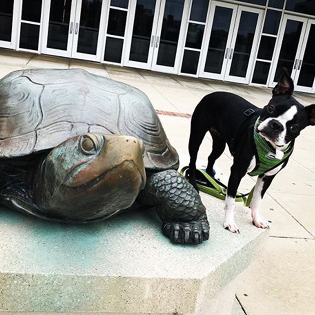 Dog standing next to Testudo at  the Xfinity Center