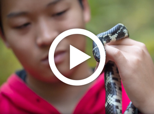 Click to watch the Discovering New Species video on Youtube