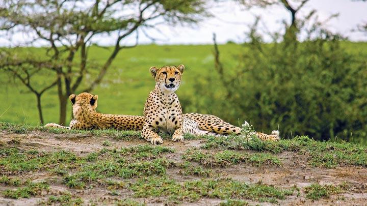 Travel with Terps | Tanzania Safari