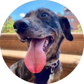 Profile picture of Kodak the dog