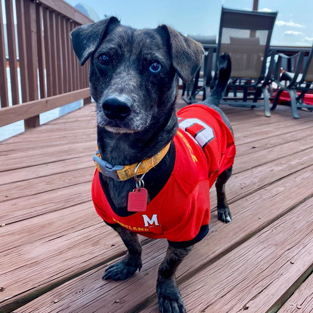 Picture of Kodak in a Maryland football jersey