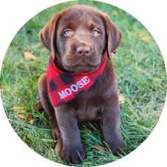 Moose's Profile Picture