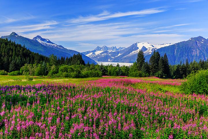 Beauty shot of the wilderness in Juneau, Alaska